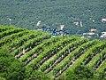 Vin-Ardéchois-Pesticides.jpg