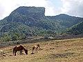 Viqueque horse.jpg