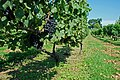 Virginia Wine Camp - Philip Carter Winery Cabernet Franc.jpg
