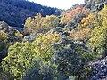 VistaGargantaLaTorrecilla 2009December20 Habitus SierraMadrona.jpg