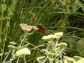 WPZ Butterflies & Blooms 11.jpg