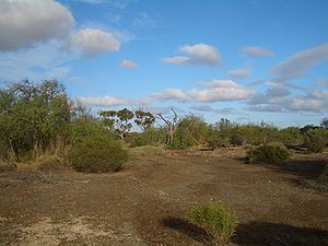 Environmental degradation - Eighty-plus years after the abandonment of Wallaroo Mines (Kadina, South Australia), mosses remain the only vegetation at some spots of the site's grounds