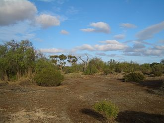 Environmental degradation - Eighty-plus years after the abandonment of Wallaroo Mines (Kadina, South Australia), mosses remain the only vegetation at some spots of the site's grounds.