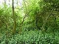 Waremme-Tumuli van het Bois des Tombes (1).JPG