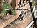 Wasp nest in yard (Aruba) 14 49 13 517000.jpeg
