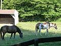 Whistlewood Farm, Rhinebeck, New York P1150910.JPG