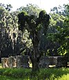 White Hall Plantation House Ruins and Oak Avenue