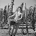 Wijnkoningin Mosella poseert met een emmer druiven in de wijngaard, Bestanddeelnr 254-4181.jpg