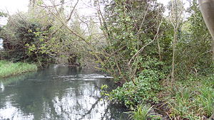 Wilderness Island - The River Wandle with Wilderness Island on the right