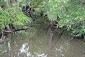 Willacoochee River, east of Ocilla, GA, US.jpg