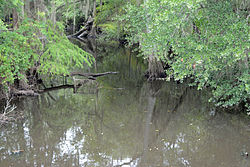 Willacoochee River, east of Ocilla, GA, US.jpg