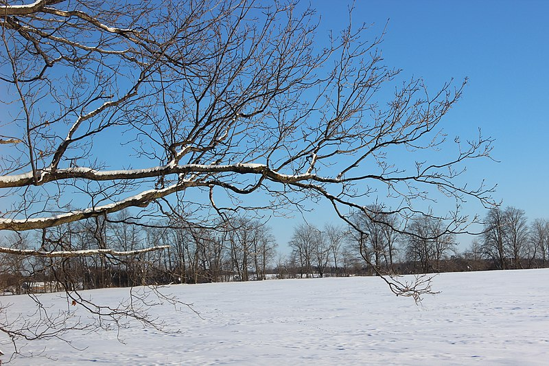 File:Winter Tree Branch (12093755895).jpg