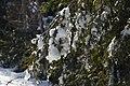 Winter forest scenery Drummond Island - 49368585977.jpg
