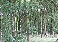 Woodland, Glen Burn - geograph.org.uk - 1422310.jpg