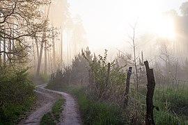 Woods near Hodonín 2020 02.jpg