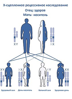 X-linked Recessive Inheritance-Ru(F).jpg