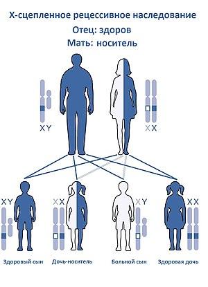 Пола Болезни Сцепленные С Полом Реферат Генетика Пола Болезни Сцепленные С Полом Реферат