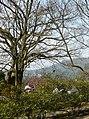 Yangmingshan Park 陽明山公園 - panoramio.jpg