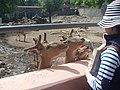 Yerevan Zoo 05.jpg