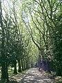 Ynysangharad Park, Pontypridd - geograph.org.uk - 421711.jpg