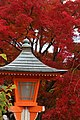 Yoshimine-dera (8255250893).jpg