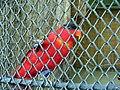 ZOO, papoušek (2).jpg