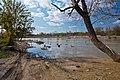 Zayandeh rood river رودخانه زاینده رود پس از باز شدن مجدد - panoramio.jpg