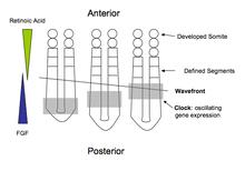 MATLAB code for image segmentation using split and merge