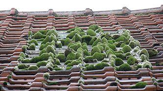 A Small Zen Roof Garden Part 36