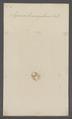 Zercon - Print - Iconographia Zoologica - Special Collections University of Amsterdam - UBAINV0274 072 03 0006.tif