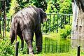 Zoo Negara (24928899081).jpg