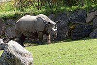 Zooparc de Beauval - Rhinocéros indien - 2016 - 001.jpg
