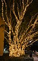 (1)Fairy lights UNSW-1.jpg
