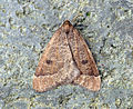 (1960) Early Moth (Theria primaria) (8348958453).jpg