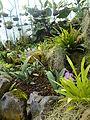 (Jardín Botánico de Quito) pic b2b.JPG