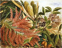 (Kiekie, nikau, five finger and karaka in fruit). 1879. by Emily Cummin Harris.jpg