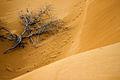 Árvore morta nas dunas do Jalapão.jpg
