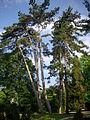 Épernay - jardin d'horticulture (07).JPG