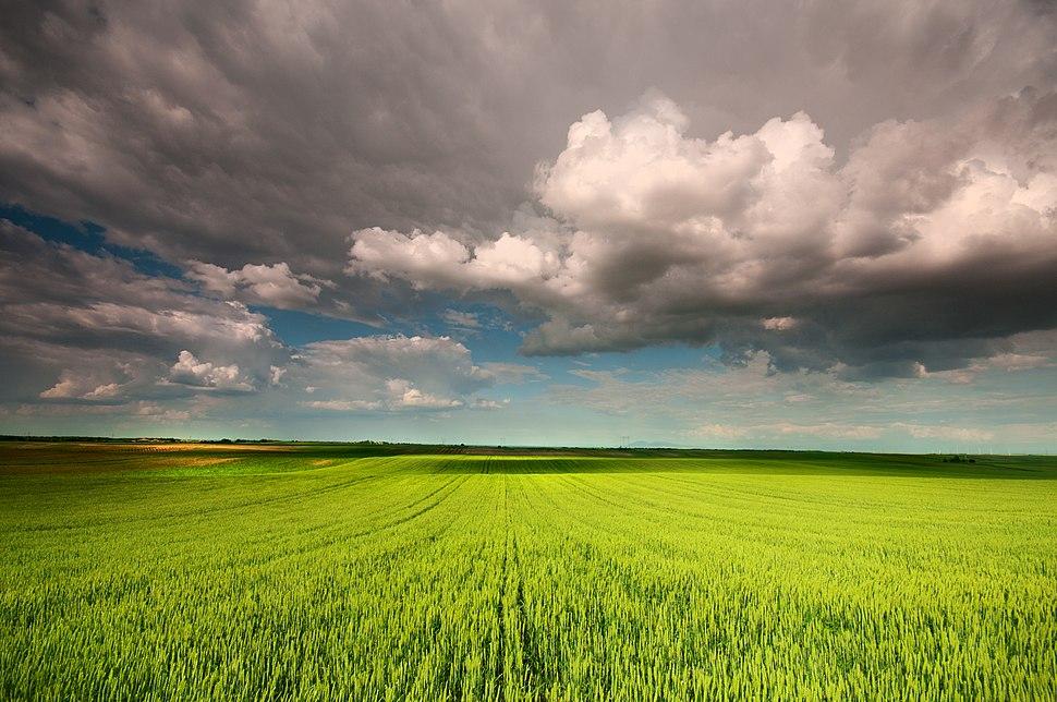 Žitna polja Banata, ka Vršcu