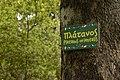 Αισθητικό Δάσος Καισαριανής 4.jpg