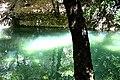 Ρόδες πεταλούδες λιμνούλα.jpg
