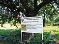 """Інформаційний щит біля старої груші. Ботанічна пам'ятка природи """"Дерево культурної груші"""".jpg"""