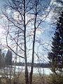 Весна - panoramio (32).jpg