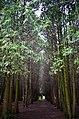 """Дендрологічний парк """"Поділля"""", Хмельницький.jpg"""
