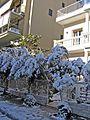 Зима в Афинах - panoramio (9).jpg