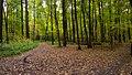 Измайловский лесопарк, развилка.jpg