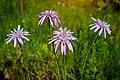 Квіти на поляні.jpg