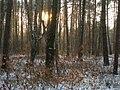 Лес в городе - panoramio.jpg