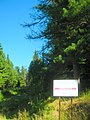 Лоскутовский кедровник - panoramio.jpg