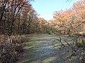 Невелике болотце в лісі.jpg